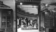 Galeria del museo de la plata/web