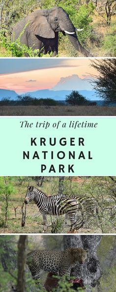 The best Kruger National Park itinerary with Viva Safaris in South Africa!