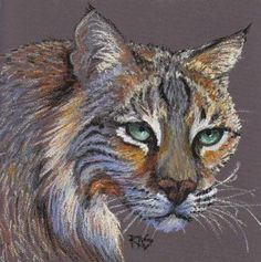 Bobcat on Colourfix sanded pastel paper by Robert  Sloan