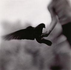 liquidnight:    Keith Carter  Open Hand, 2004  From Fireflies
