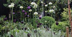 PLANTER   Snart er det tid til at lægge blomsterløg, og i den forbindelse vil…