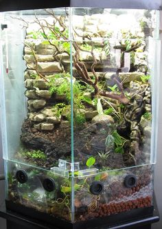 yes!! need this in my life vivarium