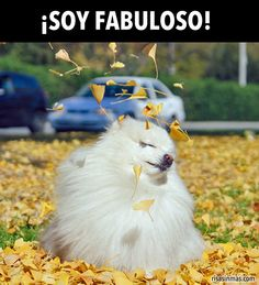 ¡Soy fabulosa! Good for adjectives