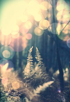 Forest bokeh, love this effect!