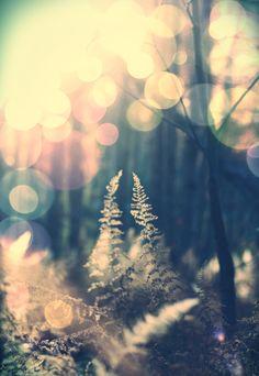 Dromend.. de zon in de lucht, stralen vallen tussen te bomen, op takken.. Sferische taferelen..