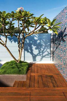 Grass under frangipani