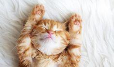 6 dolog, amit mindenki csinál, akinek macskája van, de senki nem vallja be