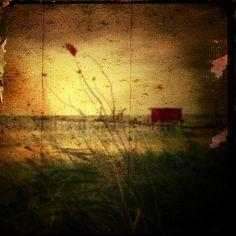 Once upon the summer/ Antonio Palmerini