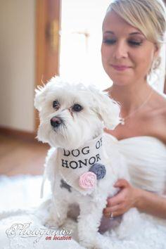 Dog of Honor! Ivory Dog of Honor Girl Collar with Flowers Bandana Rustic Burlap Wedding Photo Prop