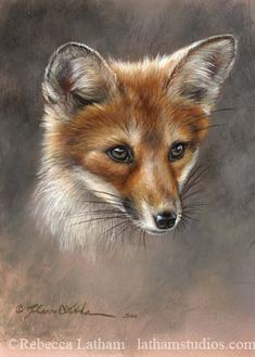 Red Fox Kit by Rebecca Latham - small.jpg | Image of an orig… | Flickr
