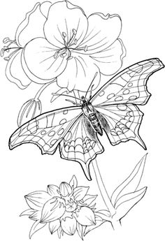 Butterfly Stands On A Plant Coloring page