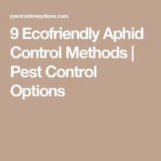 9 Ecofriendly Aphid Control Methods   Pest Control Options