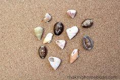 DIY Sea Shell Push Pins