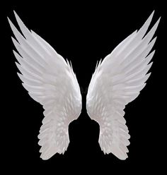 Photo about White angel wing isolated on black. Image of isolated, glow, full - 80052050