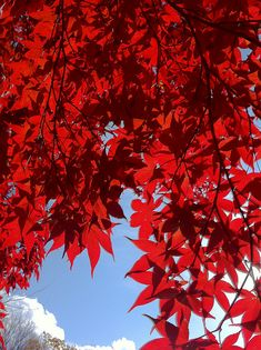 Shades of red Beautiful World, Beautiful Places, Colorful Roses, Seasons Of The Year, Shades Of Red, Belle Photo, Autumn Leaves, Red Leaves, My Favorite Color