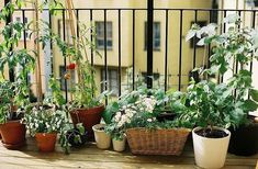 Making your own vegetable garden on your balcony is so simple