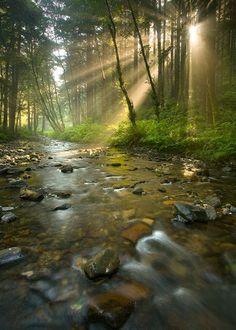 "janetmillslove: "" Rock Creek Wildernes moment love. Wild Fauna Love """