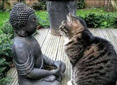 Resultado de imagem para buddha cat