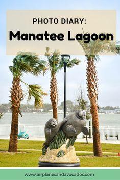 Manatee Lagoon Florida | Airplanes & Avocados