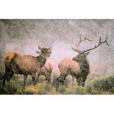 Elk in Storm Canvas Art - Gary Crandall (12 x 18)