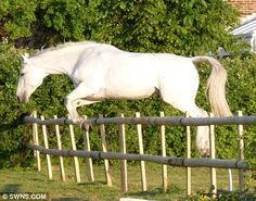 White Wolf: A Horse and her owner passed away a day apart -are together forever now