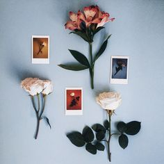 floral study with the instax 90