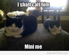 Damn WTF LOL » Animal Pictures » Page 8
