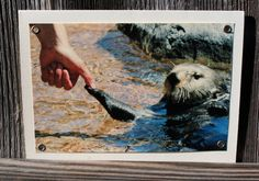 Sea Otter High Five Blank Note Card Animal by HBBeanstalk on Etsy, $3.00