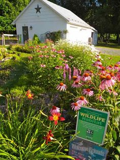 Pam's English Cottage Garden: English Cottage Garden Style for July GBBD