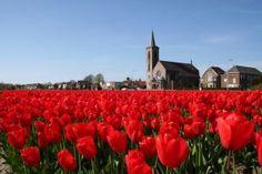 Fietsen in Nederland - Fietsen 123