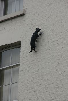 """One of the """"Cats of York"""" by frog101"""