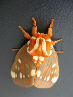 regal moth - see more beautiful insects from North America - regal moth – see more beautiful insects from North America - Cool Insects, Flying Insects, Bugs And Insects, Beautiful Bugs, Beautiful Butterflies, Paper Butterflies, Cute Moth, Colorful Moths