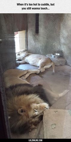 When It's Too Hot To Cuddle#funny #lol #lolzonline