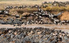 11 DAYS KENYA-TANZANIA SAFARI OFFER!!!OFFER!!!OFFER!!! - Serengeti , Tanzania , Tours | Synotrip