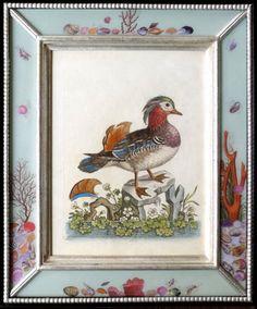 George EDWARDS (1694-1773) - 18th century engravings of waterbirds (c. 1750 England)