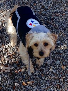 fca557227 78 Best Steelers Nation images