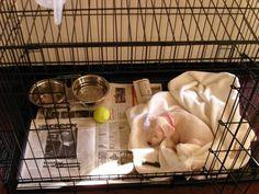 puppy in big crate