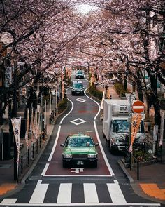 """Yo😁, this is a pretty popular Street in Shibuya where you can enjoy the beautiful scene😍 of Sakura🌸 and it's called """"Sakura Dori"""" which… Tokyo Japan, Japanese Culture, Dory, Scene, Popular, Canning, Photo And Video, Street, Pretty"""