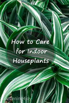 Foliage Plants, Houseplants, Homesteading, Dyi, Planting Flowers, Helpful Hints, Mothers, Garden Ideas, Gardens