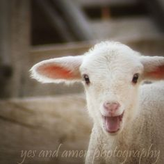 "photography images from a wonderful ""farm fresh"" photographer on etsy - so darling!"