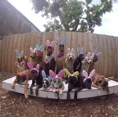 Love Dogs, Puppy Love, Brown Eggs, Dog Boarding, Easter Treats, Cool Pets, Animals Beautiful, Toy Chest, Dogs And Puppies