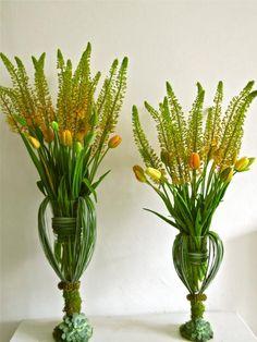 Eremurus & French Tulips