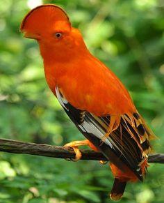 Very Beautiful Orange Colored Bird