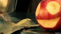 Watch: Yoplait Seasons - Fall - What makes fall so good