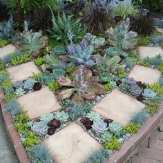 100 Succulent Garden Ideas for Uniqueness and Intrigue in Your Garden - Page 3 of 4