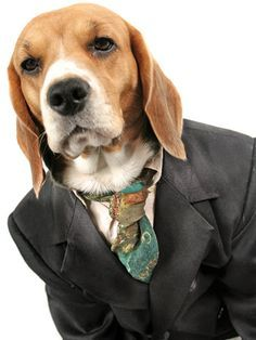 Dogs Dressed Up In Men's Clothing