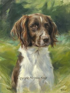 Animal Paintings, Animal Drawings, Dog Drawings, Spaniel Breeds, Watercolor Projects, Dutch Artists, Wildlife Art, Dog Portraits, Art Plastique