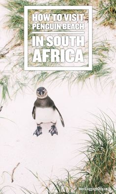 How To Visit Penguin Beach In South Africa Hand Luggage - Boulders Beach Is One Of The Loveliest Places To Experience When Visiting South Africa Not Just Because Of The Cutest Little Penguins But The Amazing How To Visit Penguin Beach In South Africa Tr # Visit South Africa, Cape Town South Africa, Durban South Africa, Africa Destinations, Holiday Destinations, Road Trip, I Want To Travel, African Safari, Africa Travel