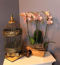 Orchid Planter Accents Home Decor