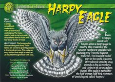 Name: Harpy Eagle Category: Nightmares of Nature Card Number: 17 Front: Harpy Eagle Nightmares of Nature Card 17 front Back: Harpy Eagle Nightmares of Nature Card 17 back Trading Card: Eagle Facts, Harpy Eagle, Adventure Magazine, Monster Book Of Monsters, Interesting Animals, Wild Creatures, Animal Species, Animal Cards, Science And Nature